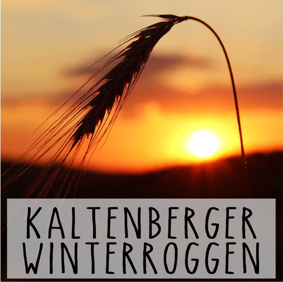 KaltenbergerWinterroggen_Biohof