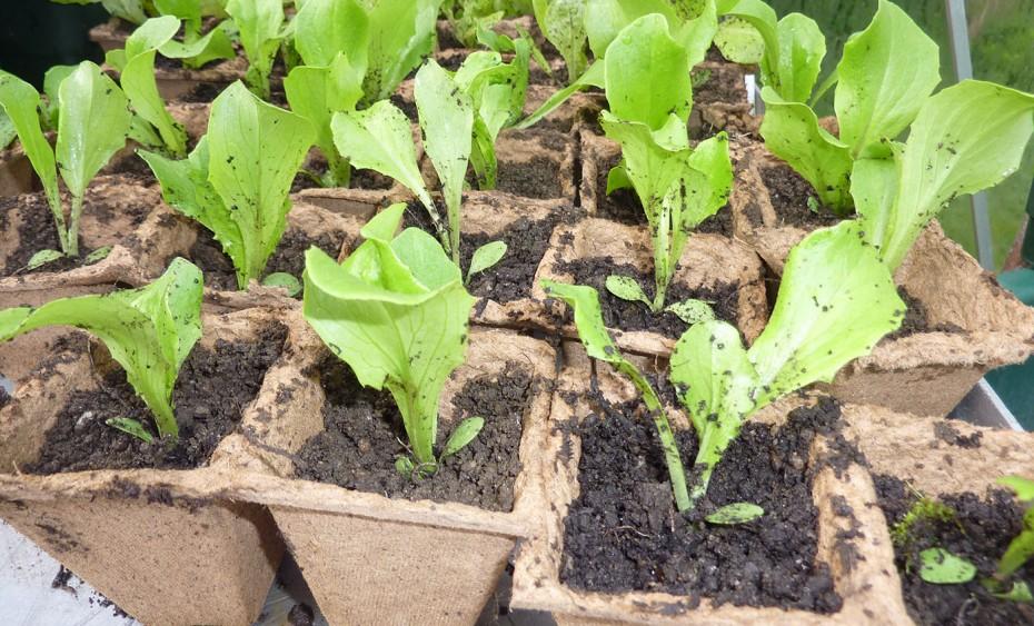 News_Biohof_Salatpflanzen