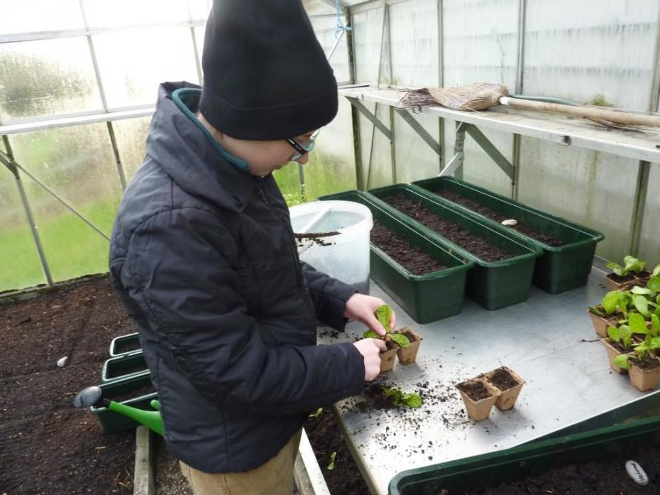 News_Biohof_Salatpflanzen1