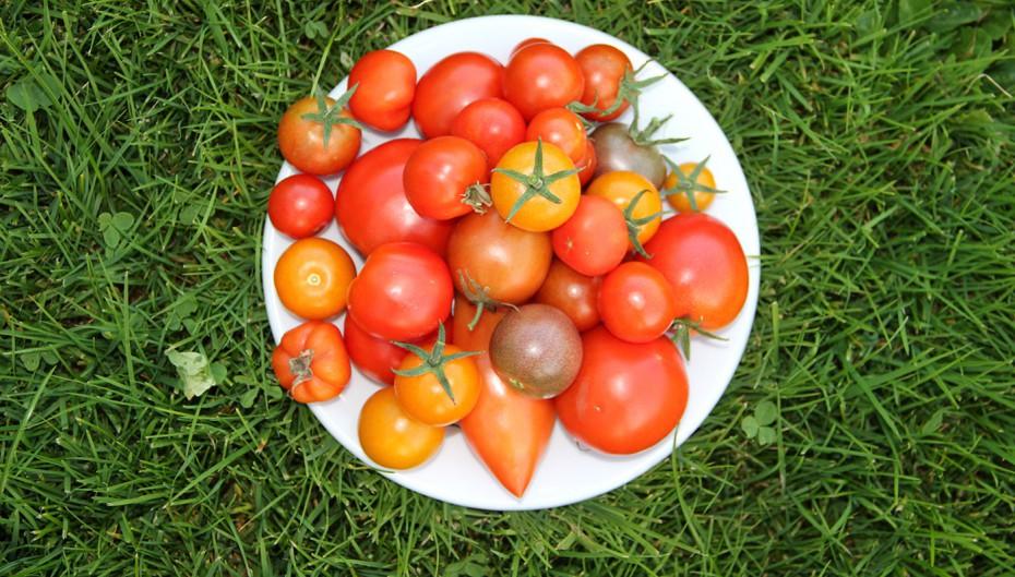 Tomaten_Biohof