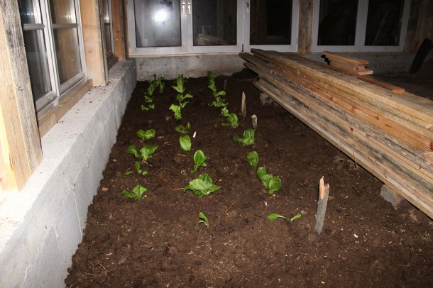 Gewächshaus Pflanzen setzen_4