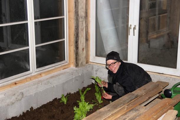 Gewächshaus Pflanzen setzen_2